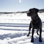 Ilex passar på att njuta av vädret och få springa fritt på sjön :)